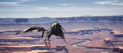 Raven in Canyonlands