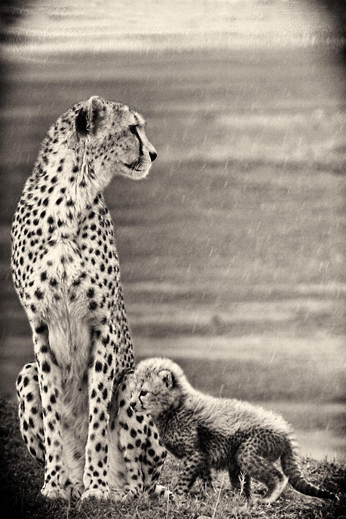 Cheetah & Cub in the Serengeti