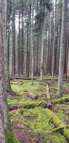 Forêt_digne