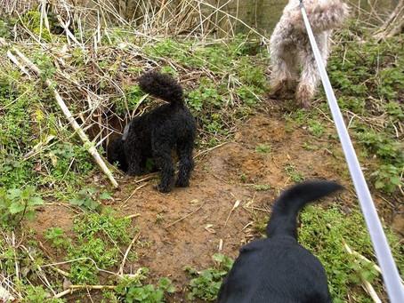 False Friends of Canine Communication