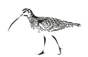 Curlew CC_Bird-01.png