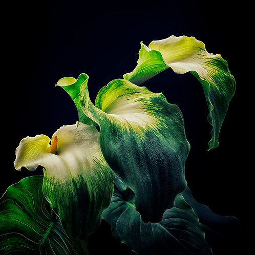 Green Goddess No.1B