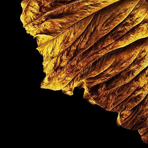 Golden Memorial No.1A