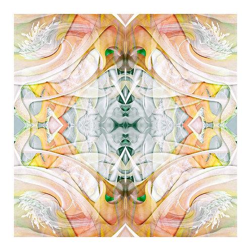 Epiphyllum Dreams No.1
