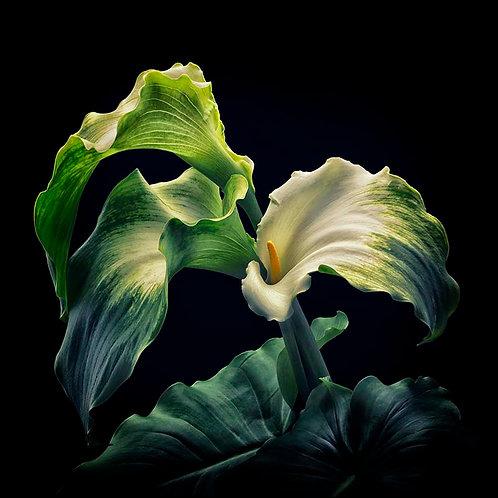 Green Goddess No.4B