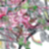 6321_Grevillea_Tango_Quarterly.jpg