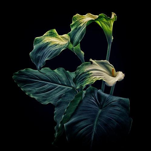 Green Goddess No.2B