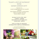 Plant a Pot of Patience