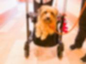 Besuchshund Therapie mit Hund