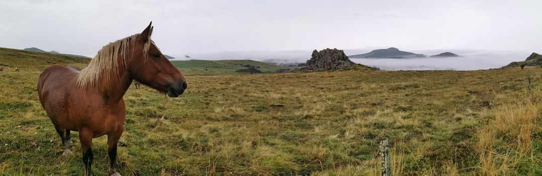 paysages_du_Meznc_cheval.jpg