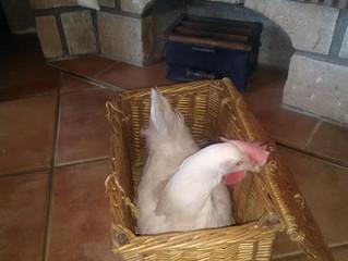 C'est Pâques à la Ferme !