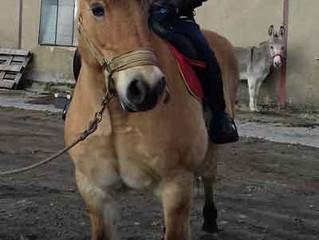 deux nouveaux venus à la ferme, pour le bonheur des cavaliers et des autres ...