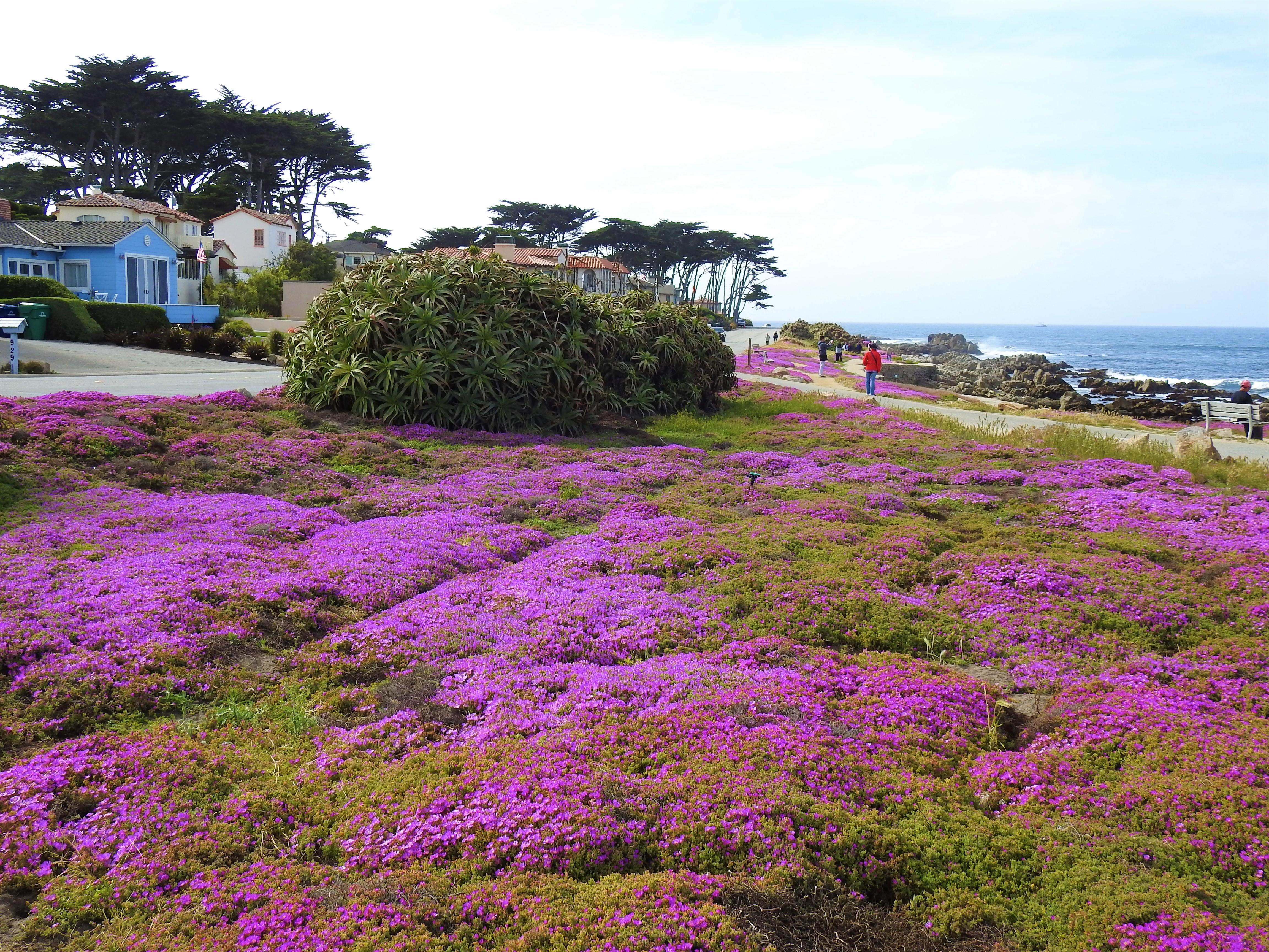 舊金山生態慢活之旅- 野花季 4月1日至 4月8日