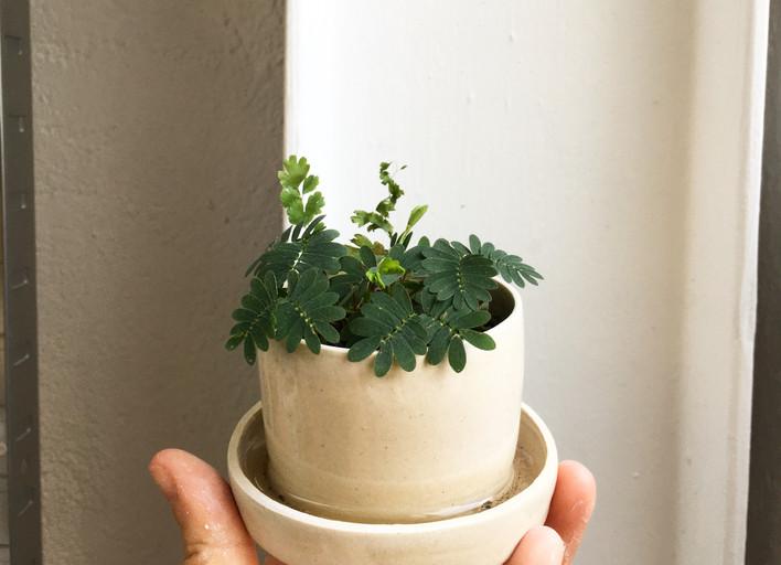 Pot à coupelle intégrée