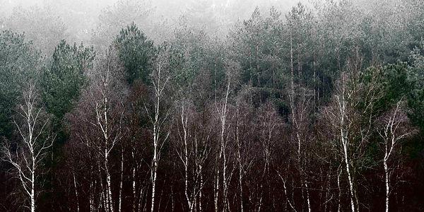 Woods I_KarenWinnubstFotografie_LR.jpg