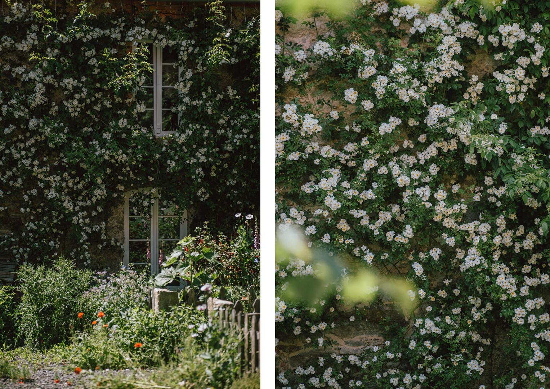 12 róże.jpg