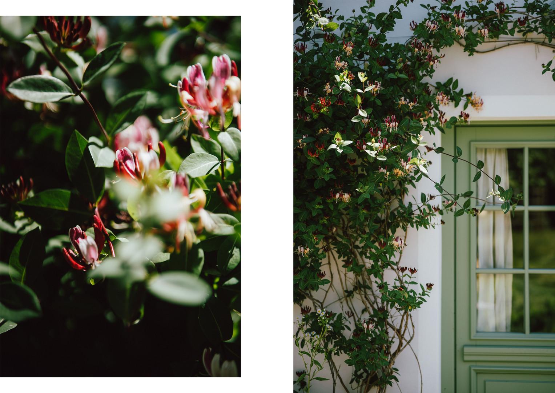 11 róże.jpg