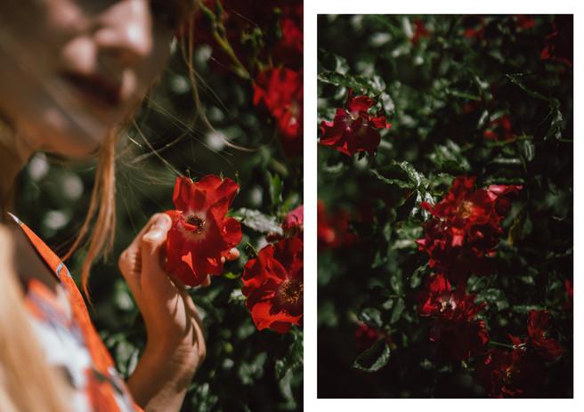 8 róże.jpg