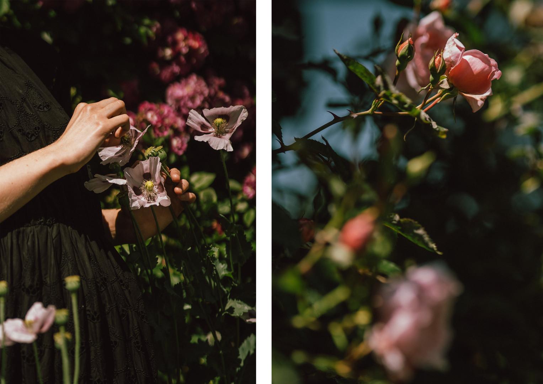 19 róże.jpg