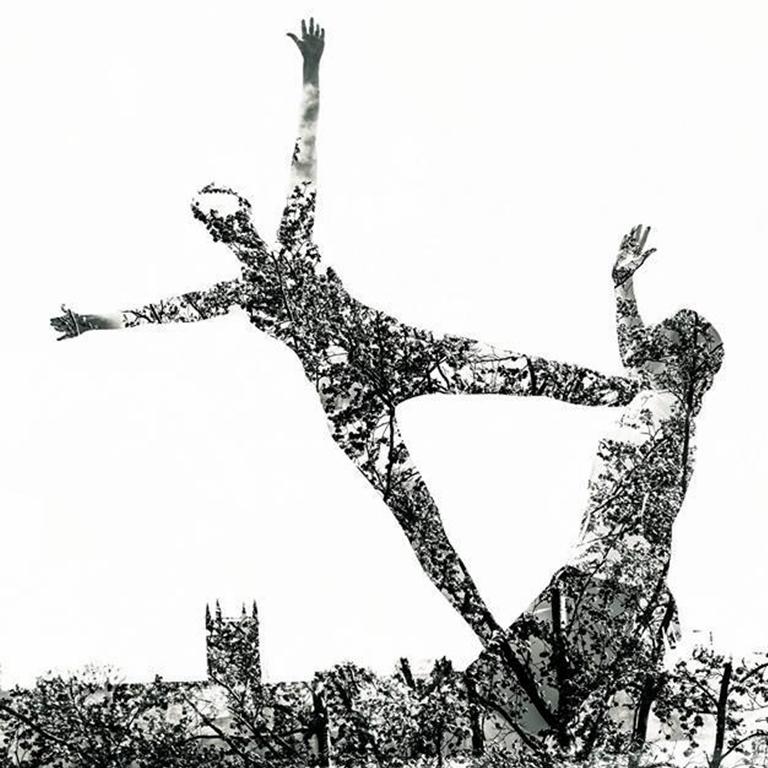 Acro Trees