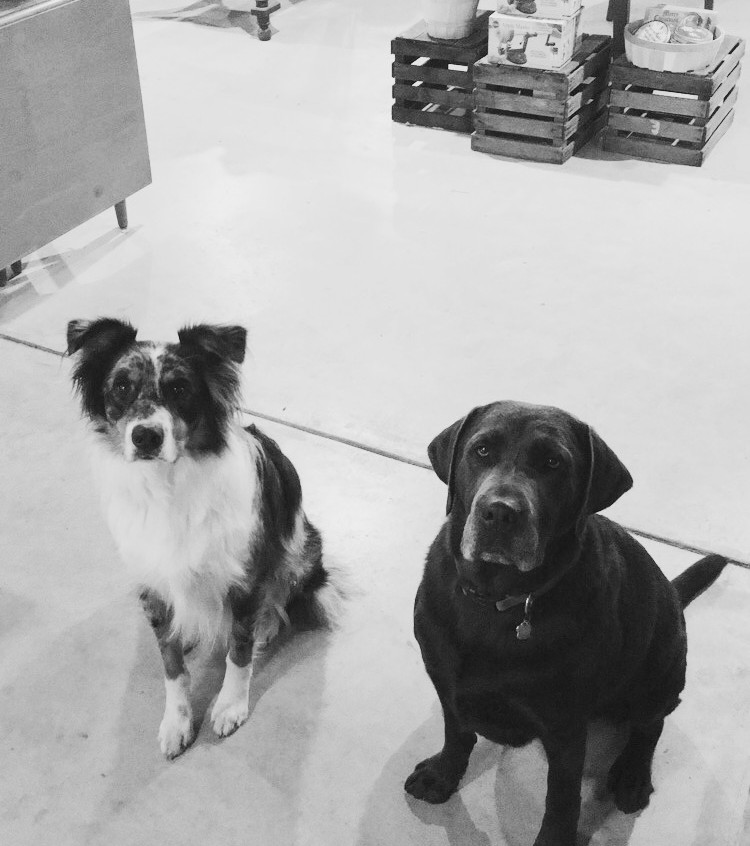 Orchard Pups