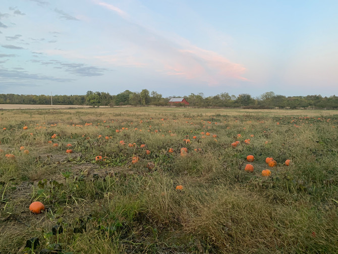 Crop Report: Autumn Leaves, Fresh Picked Apples, and Pumpkins