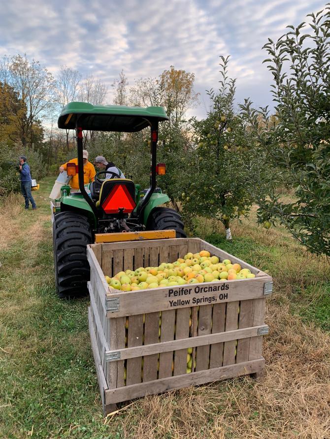 Crop Report: Goldrush Apples!