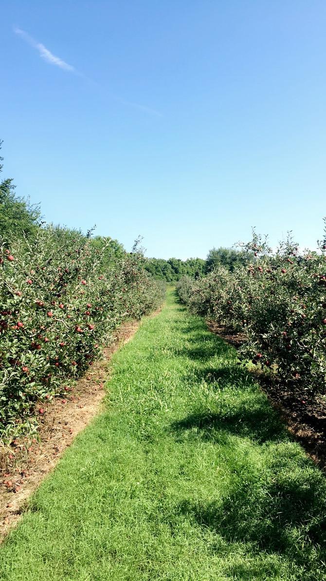 Crop Report: Apple Update