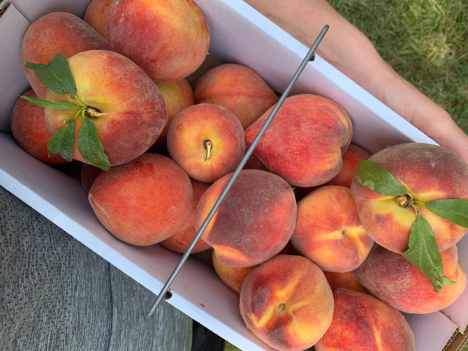 Crop Report: Sweet Southern Peaches
