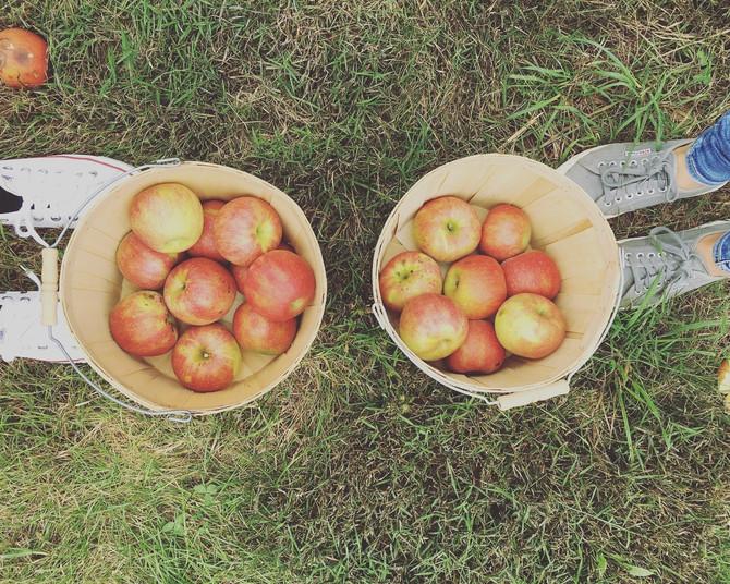 Crop Report: Crisp Air, Crisp Apples