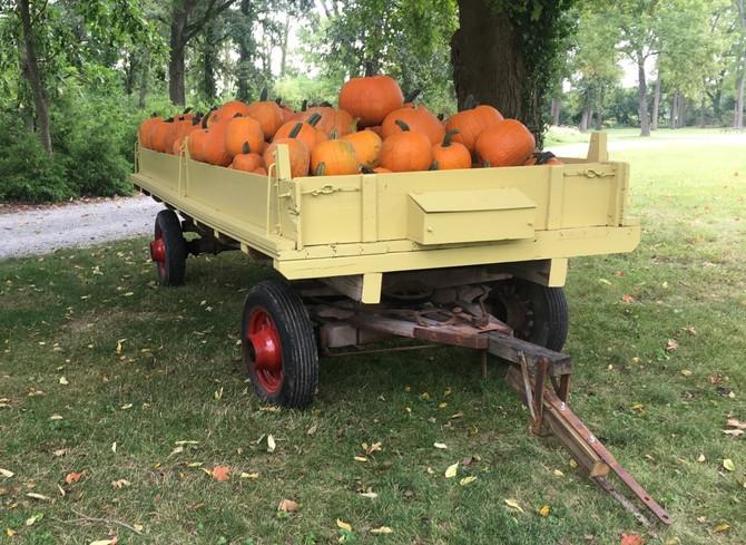 Crop Report: Hey, October!