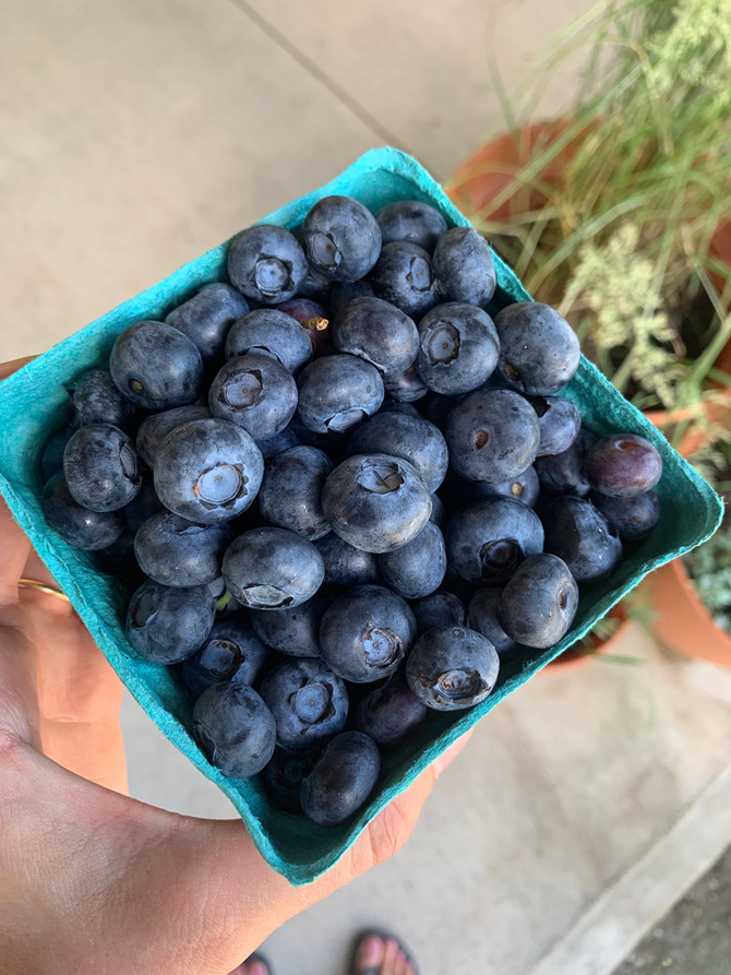 Crop Report: Michigan Blueberries