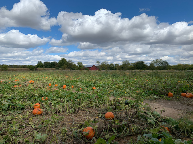 Crop Report: Autumn Leaves and Pumpkin Picking
