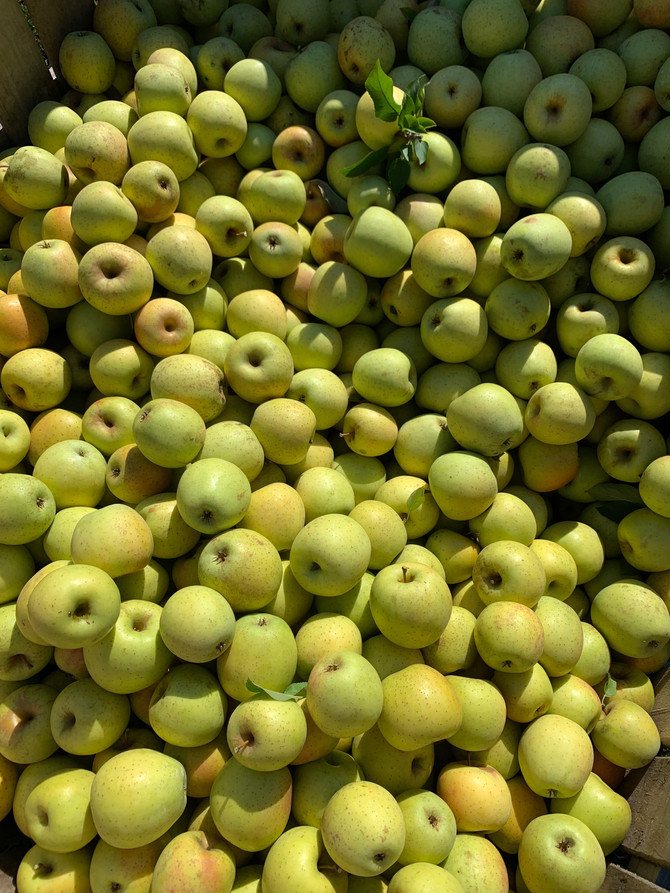 Crop Report: It's Applesauce Time!