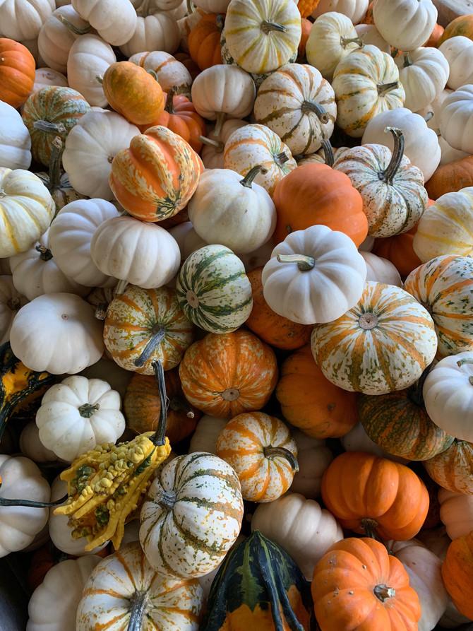 Crop Report: Pumpkins, Pumpkins, Pumpkins!