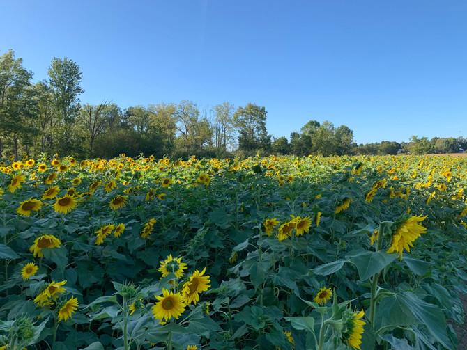 Crop Report: Welcome Autumn!