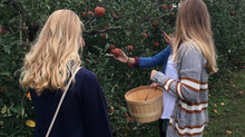 Crop Report: U-Pick Apples