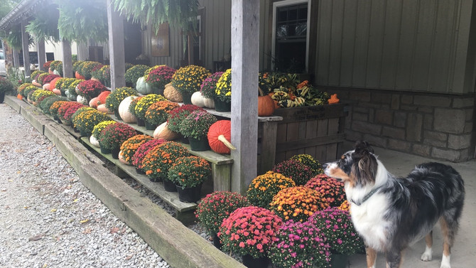 Crop Report: Hello Fall!