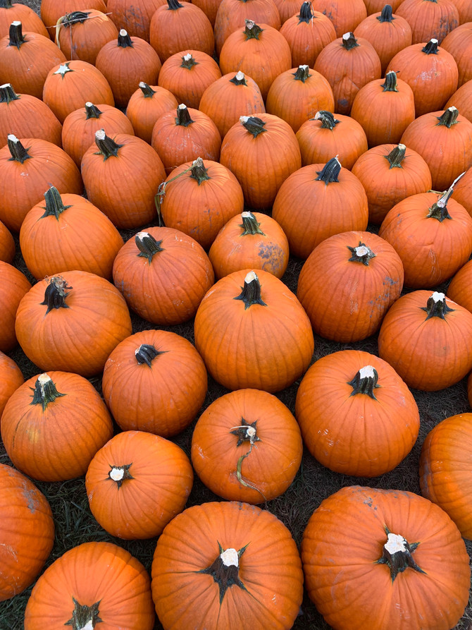 Crop Report: Fall in the Orchard & Pumpkin Patch