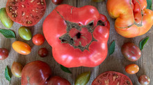 Crop Report: Locally Grown Heirloom Tomatoes