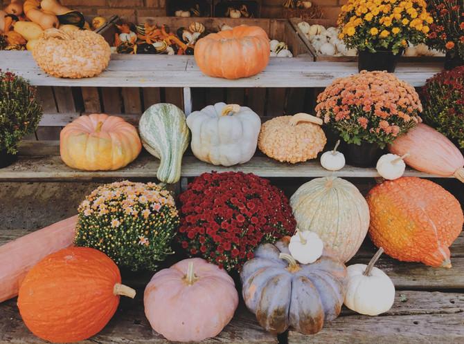 Crop Report: U-Pick Pumpkins
