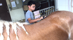 horse-therapy-reuben-grooming-horse-data.png