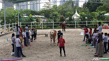horse-therapy---northlight-school-students---2488478.png