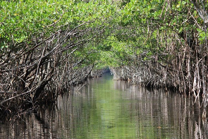 foto mangrovie.jpg