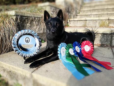 Arminka Master of Dogdancing 1