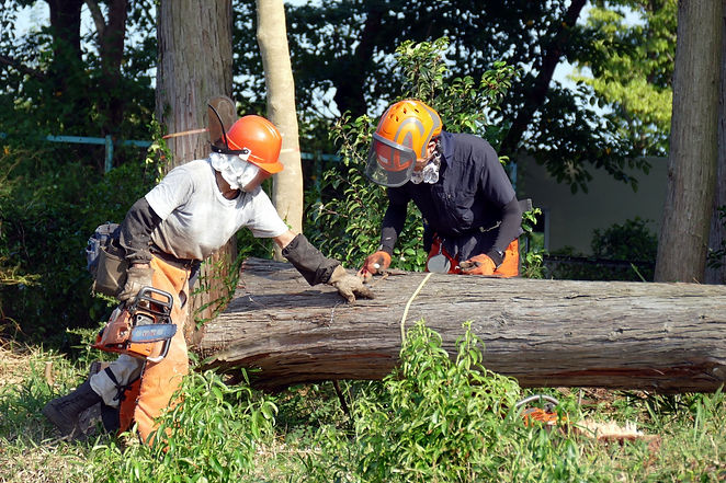 林業の仕事
