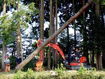 伐採作業中
