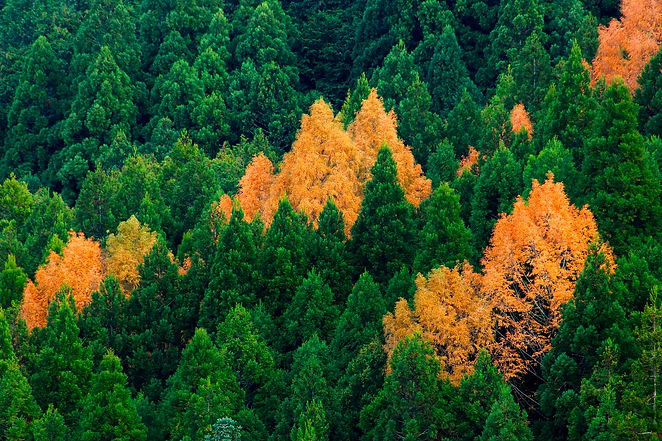 森林管理・間伐