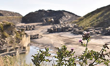 blog photo of thistles with quarry in the background