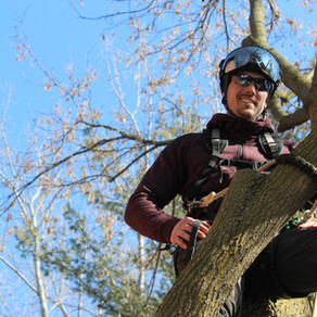 How to Trim & Prune Trees Properly